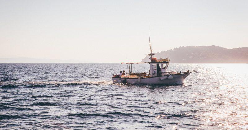 New Florida Law Allows Transportation of Bahamas' Fish