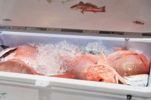 Red Snapper Season Begins This Weekend Riviera Dunes Marina Blog