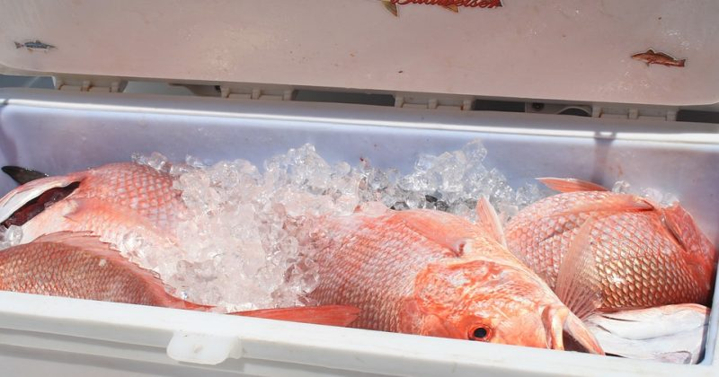 Red Snapper Season Begins This Weekend