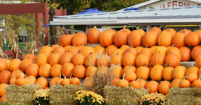 4 Events for Fall Fun in the Palmetto Area