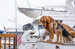 8 Tips for Boating with Your Pups Riviera Dunes Marina Blog