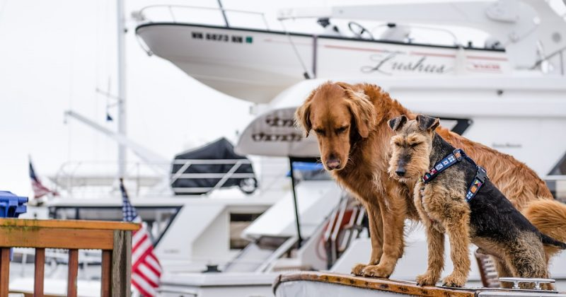 8 Tips for Boating with Your Pups