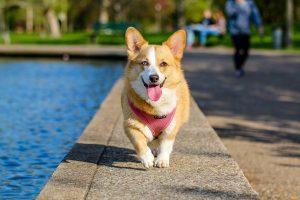 Dog Parks Near Riviera Dunes Marina