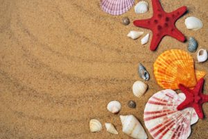 3 Places For Shelling Near Riviera Dunes Marina