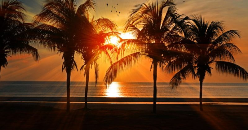 Summer in Sarasota: A Complete Vacation Guide
