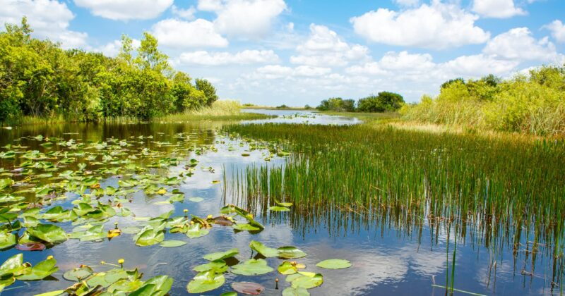 Weekend Trip: Pole Boating In The Everglades