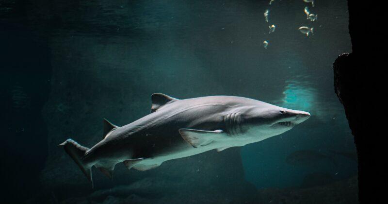 Shark Sighting Safety Tips