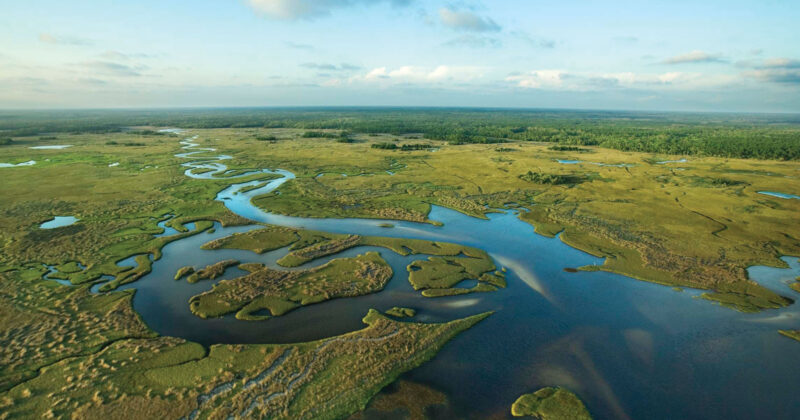 Everglades Funding Will Likely Boost Florida's Fishing Tourism